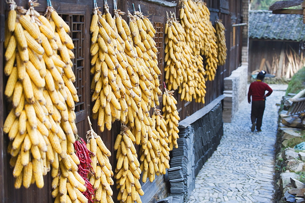 Corn decorating a house in Langde village, Guizhou Province, China, Asia