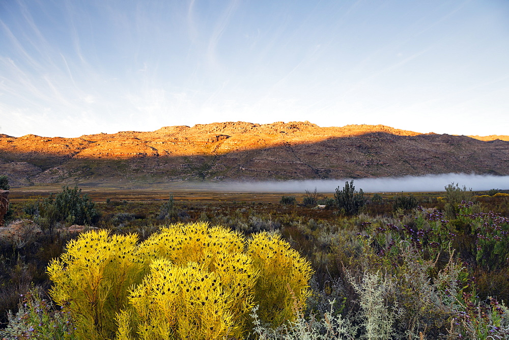 Cederberg Wilderness Area, Western Cape, South Africa, Africa