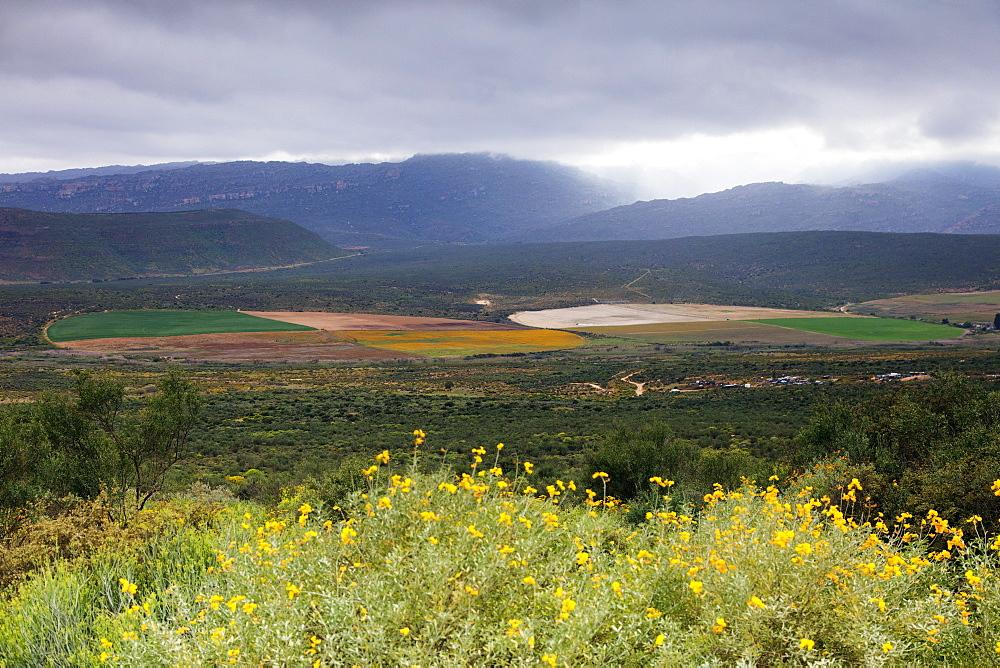 Crop circles, Cederberg Wilderness Area, Western Cape, South Africa, Africa