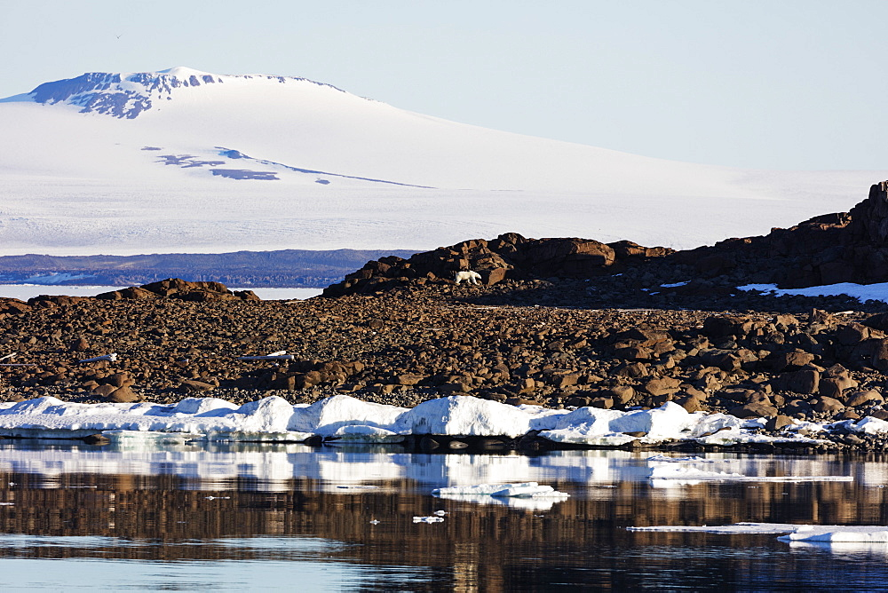 The Arctic, Europe, Norway, Svalbard, Spitsbergen, polar bear (Ursus maritimus)