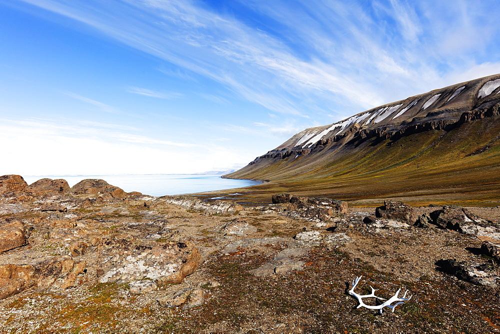 The Arctic, Europe, Norway, Svalbard, Spitsbergen, Kapp Lee, molted Reindeer antlers