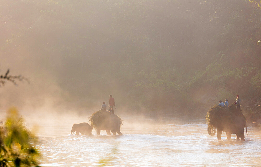 Working elephant (Elephas maximus indicus) crossing a river at dawn, Chitwan National Park, UNESCO World Heritage Site, Nepal, Asia