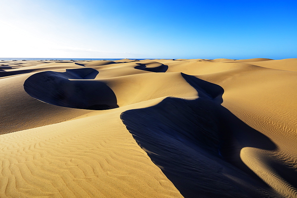 Europe, Spain, Canary Islands, Gran Canaria, Nature Reserve Dunes of Maspalomas - 733-8450