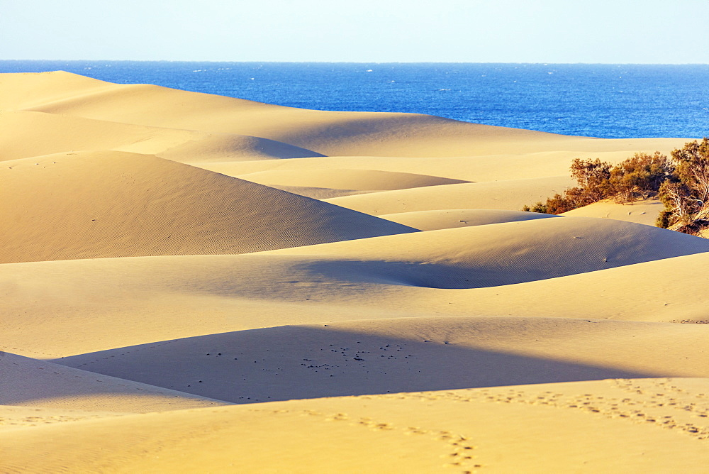 Europe, Spain, Canary Islands, Gran Canaria, Nature Reserve Dunes of Maspalomas - 733-8452
