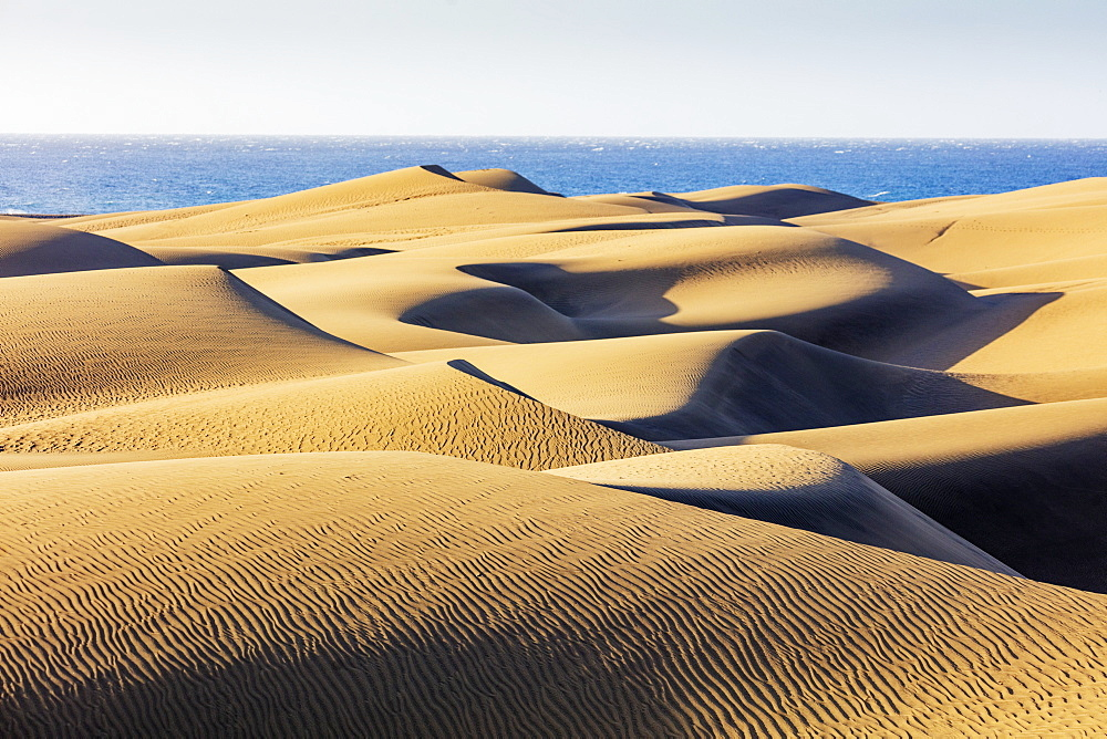 Europe, Spain, Canary Islands, Gran Canaria, Nature Reserve Dunes of Maspalomas - 733-8454