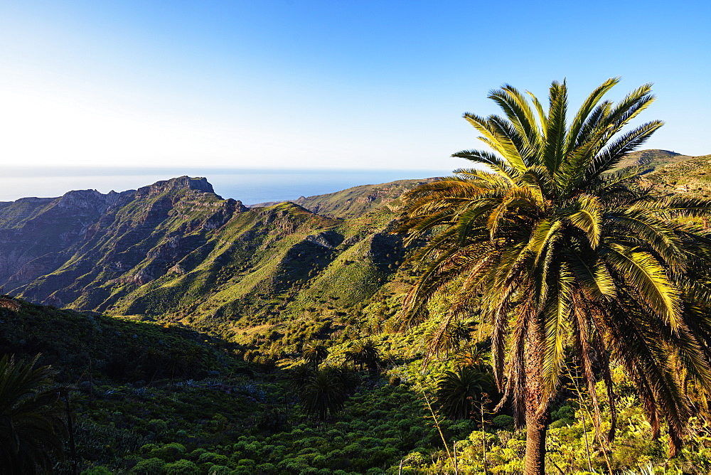 Europe, Spain, Canary Islands, La Gomera, Unesco Biosphere site, Garajonay National Park - 733-8465