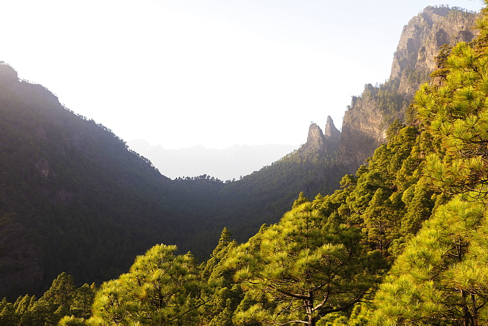 Europe, Spain, Canary Islands, La Palma, Unesco Biosphere site, National Park Caldera de Taburiente - 733-8479