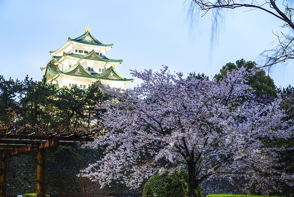 Asia, Japan, Honshu, Aichi prefecture, cherry blossom at Nagoya castle