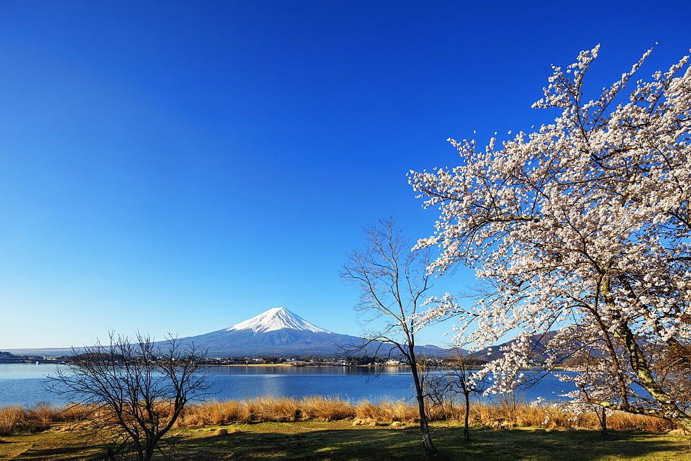 Cherry blossom, Mount Fuji, 3776m, UNESCO World Heritage Site, and Kawaguchiko lake, Yamanashi Prefecture, Honshu, Japan, Asia