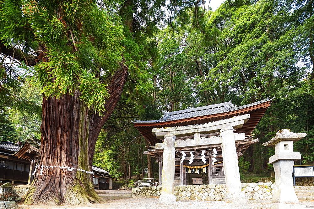 Hachimangu Shrine, Nagano Prefecture, Honshu, Japan, Asia