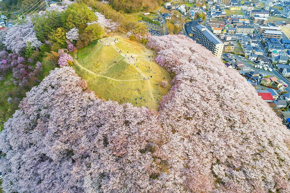 Cherry blossom at Koboyama, Matsumoto, Nagano Prefecture, Honshu, Japan, Asia