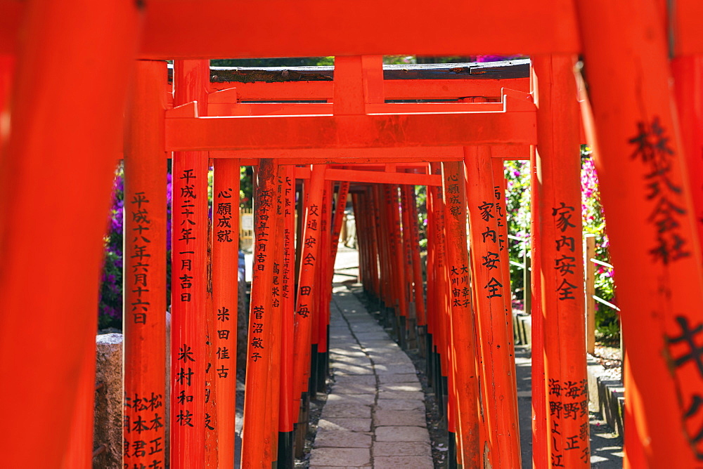 Asia, Japan, Tokyo, Nezu shrine, torii gate