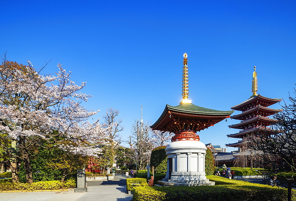 Asia, Japan, Tokyo, spring cherry blossoms, Asakusa, Sensoji temple