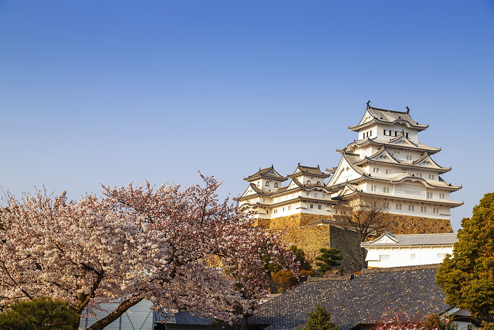 Asia, Japan, Hyogo, cherry blossom at the 17th century Himeji Castle, Unesco site
