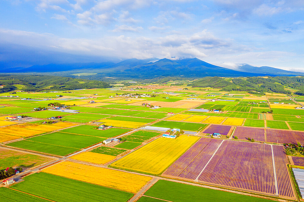 Japan, Hokkaido, Furano, aerial view of farmland