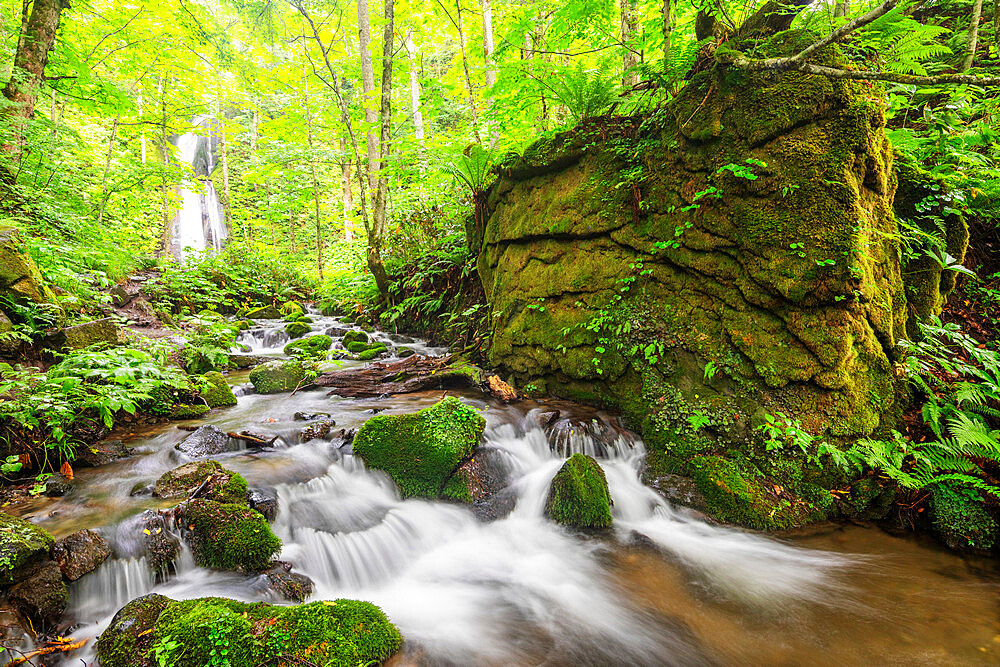 Waterfall at Oirase Gorge, Aomori prefecture, Tohoku, Honshu, Japan, Asia
