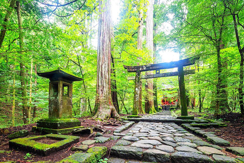 Japan, Honshu, Tochigi prefecture, Nikko, Unesco site, Kitano shrine torii gate