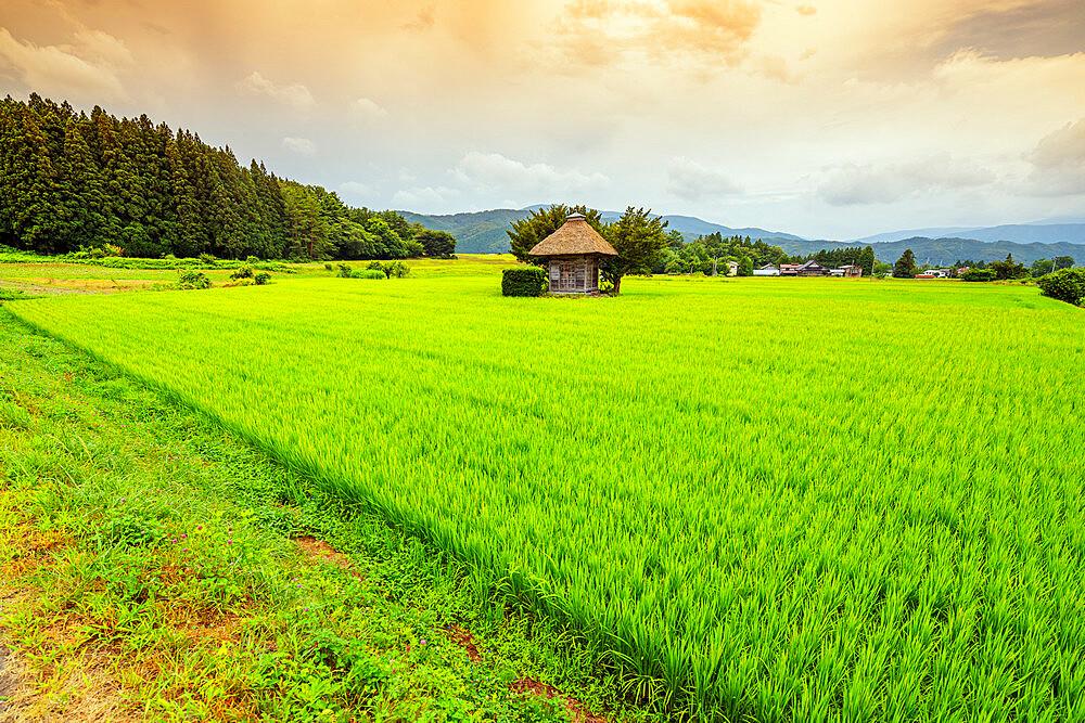 Japan, Honshu, Tohoku, Iwate prefecture, Tono city, Aragami jinja shrine in a field of canola