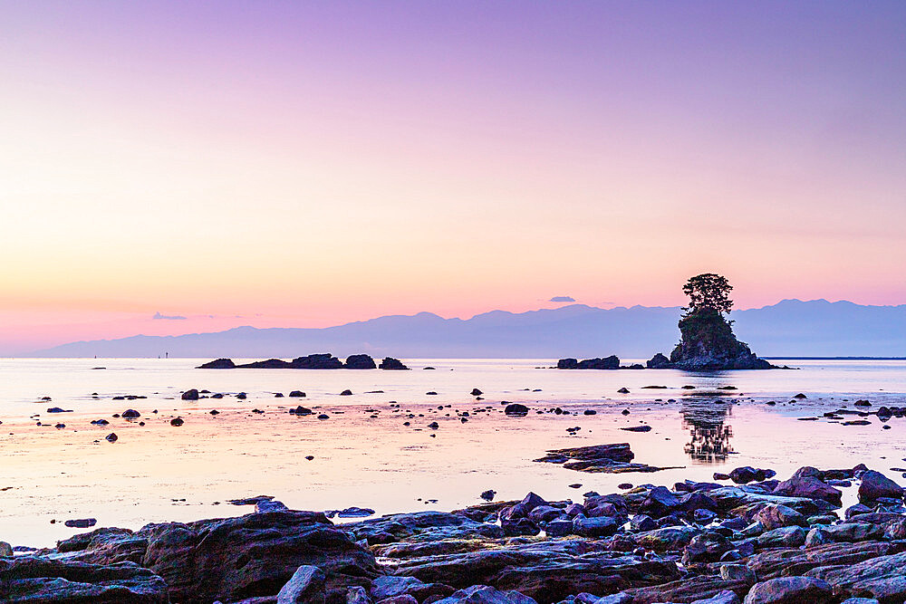 Japan, Honshu, Toyama prefecture, Ameharakaigan, pine tree on a rock outcrop in the sea of Japan