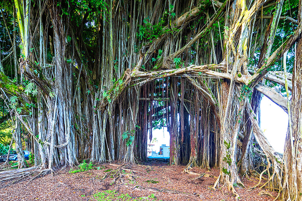 Hilo, Big Island, Hawaii, United States of America, North America