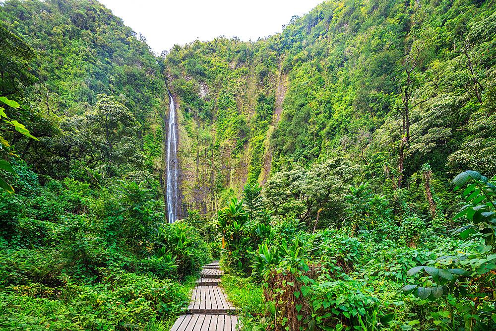 United States of America, Hawaii, Maui island, Haleakala National Park, Pipiwai trail, Waimoku falls - 733-9044