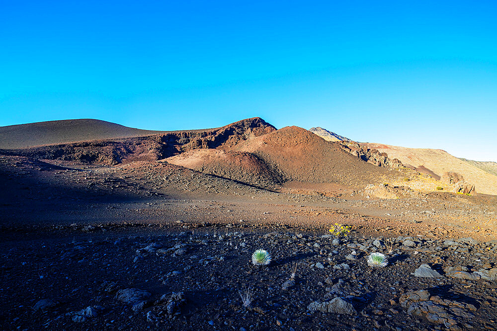 Volcanic landscape, Hawaii silversword (Argyroxiphium sandwicense) endemic, Haleakala National Park, Maui Island, Hawaii, United States of America, North America