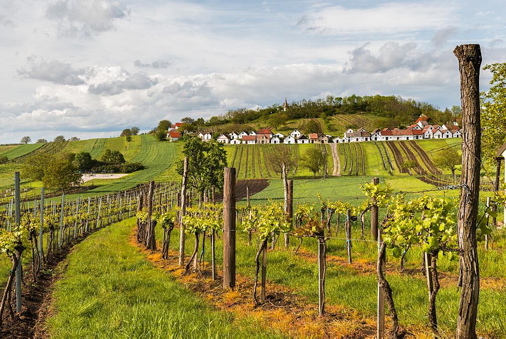 Wine cellars and vineyard above village of Galgenberg, Niederosterreich