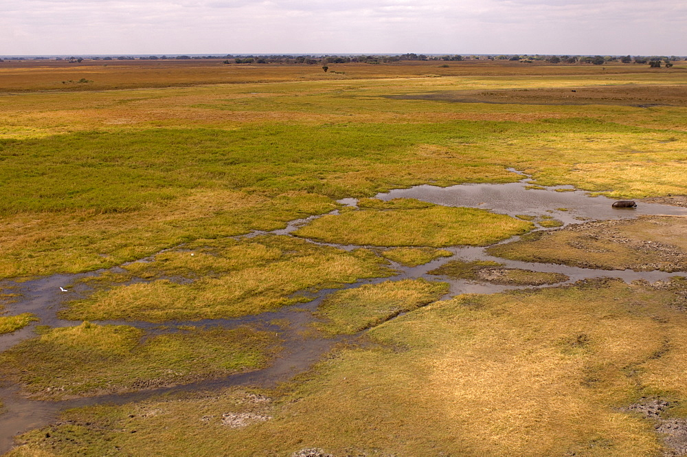 Helicopter flight over Busanga Plains, Kafue National Park, Zambia, Africa