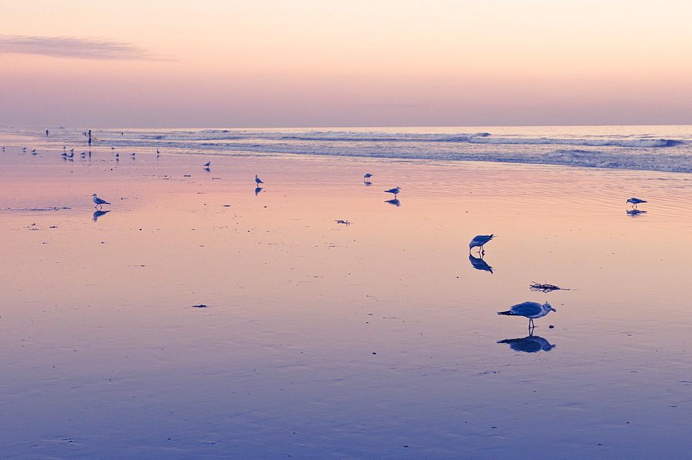 Huntington Beach, California, United States of America, North America