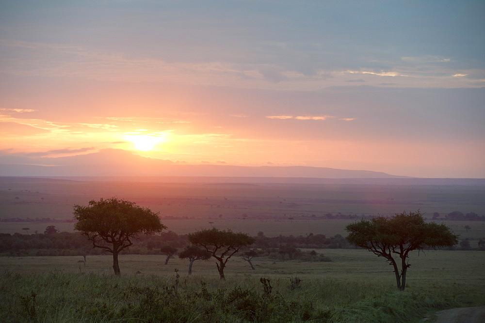 Masai Mara, Kenya, East Africa, Africa