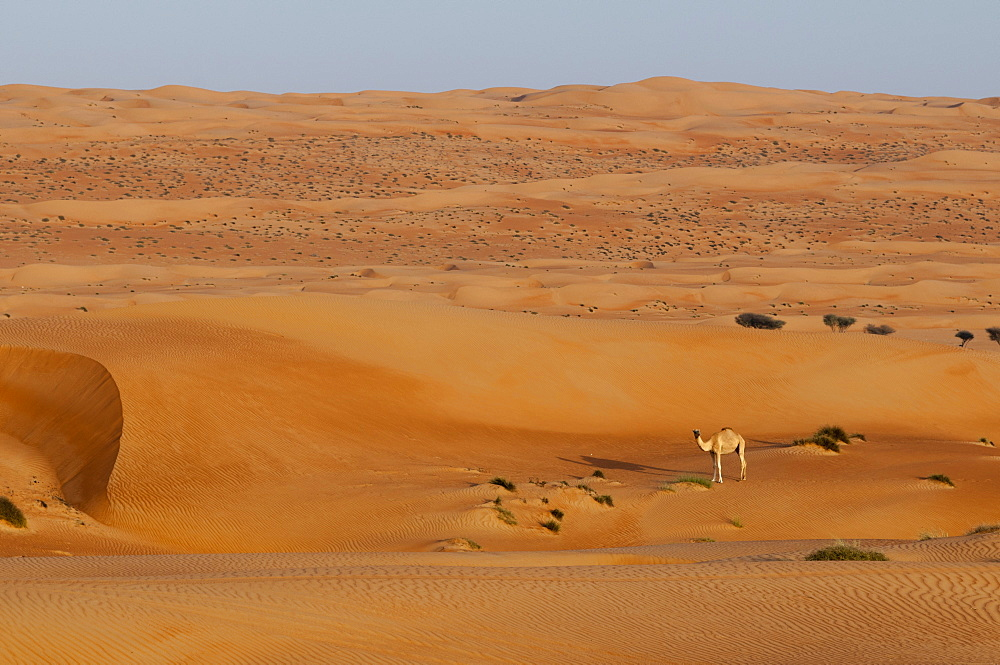 Wahiba Sands desert, Oman, Middle East