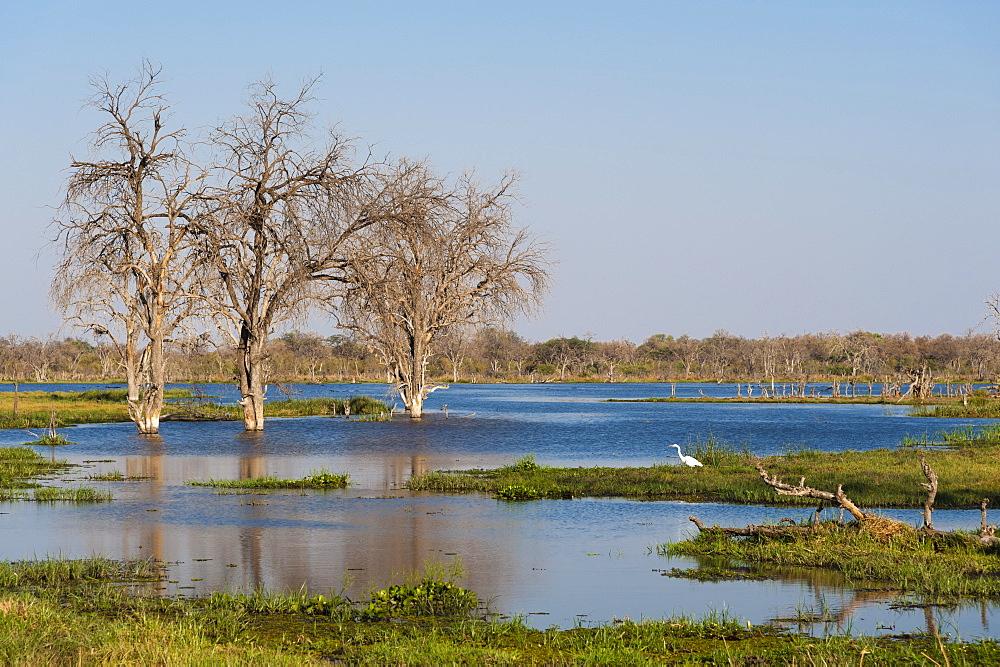 View of the Khwai river in the Okavango Delta - 741-5259