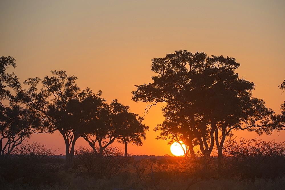 Sunset in the Savuti marsh, Botswana, Africa
