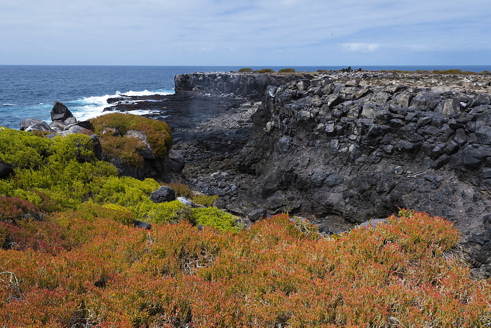 Colorful vegetation on Punta Suarez, Espanola Island, Galapagos Islands, UNESCO World Heritage Site, Ecuador, South America - 741-5556