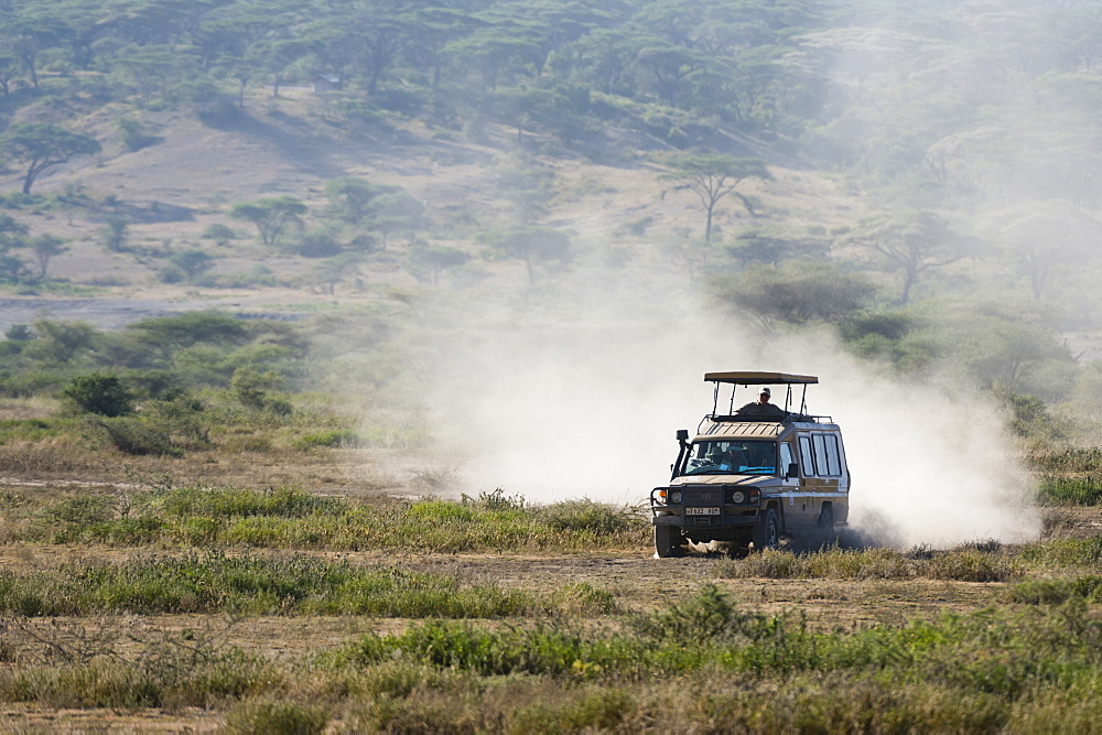 A safari vehicle driving in the Ndutu area, Ndutu, Ngorongoro Conservation Area, Serengeti, Tanzania, East Africa, Africa - 741-5655