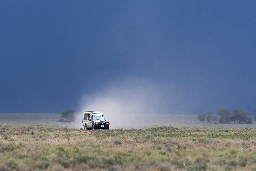 A safari vehicle driving in Ndutu, Ngorongoro Conservation Area, Serengeti, Tanzania, East Africa, Africa - 741-5668