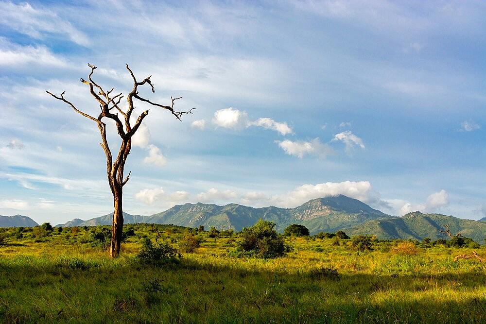 Lualenyi, Tsavo Conservation Area, Kenya, East Africa, Africa - 741-5959
