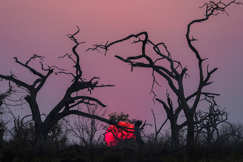 Sunset, Chobe National Park, Botswana, Africa