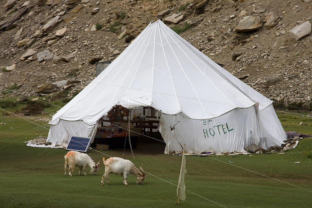 Tent hotel, Tsomori, Ladakh, India, Asia