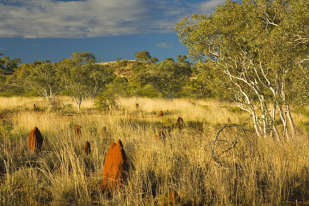 Termite mounds in the Outback, Queensland, Australia, Pacific