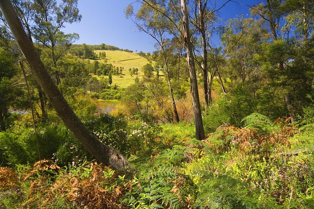 Bushland, Snowy River National Park, Victoria, Australia, Pacific