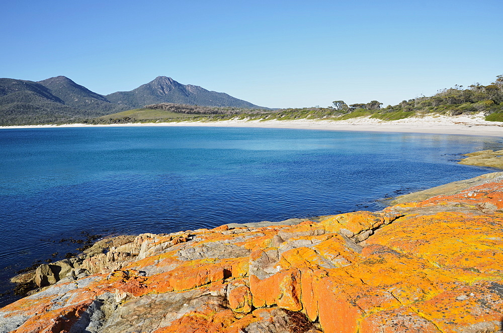 Red lichen on rocks, Wineglass Bay, Freycinet National Park, Freycinet Peninsula, Tasmania, Australia, Pacific