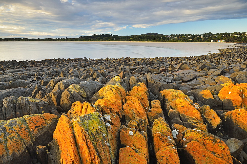 Lichen covered rocks, shore at Greens Beach, Tasmania, Australia, Pacific