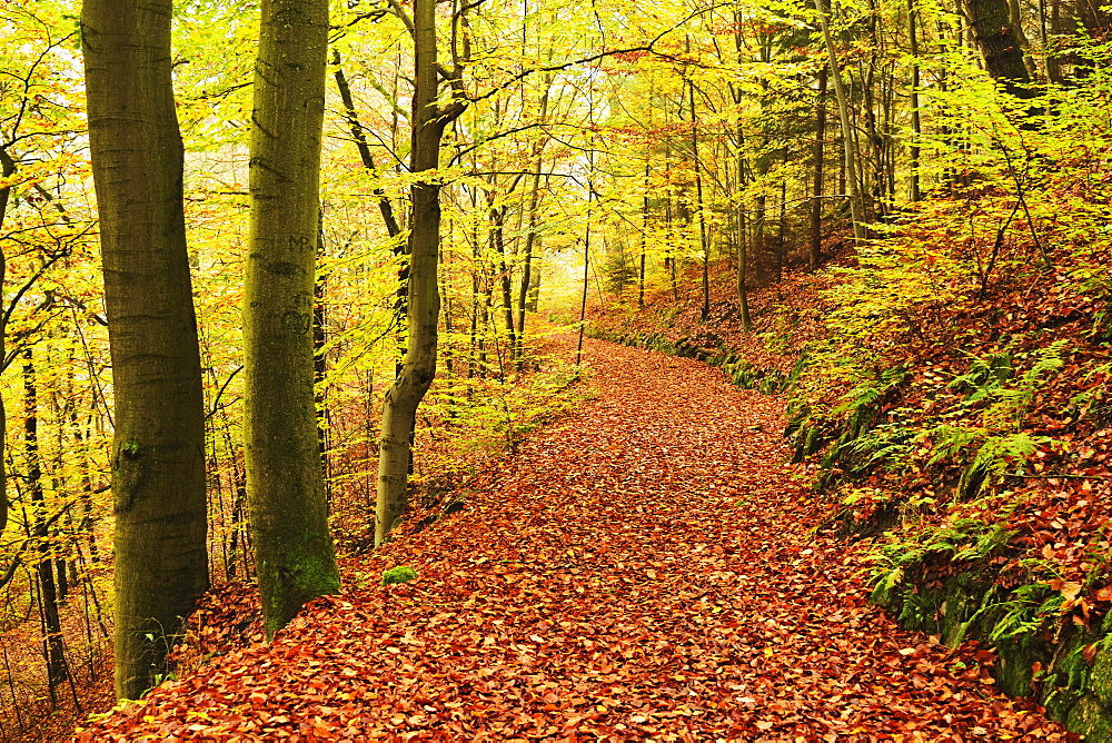 Autumn forest around Karlovy Vary, Czech Republic, Europe - 756-2778