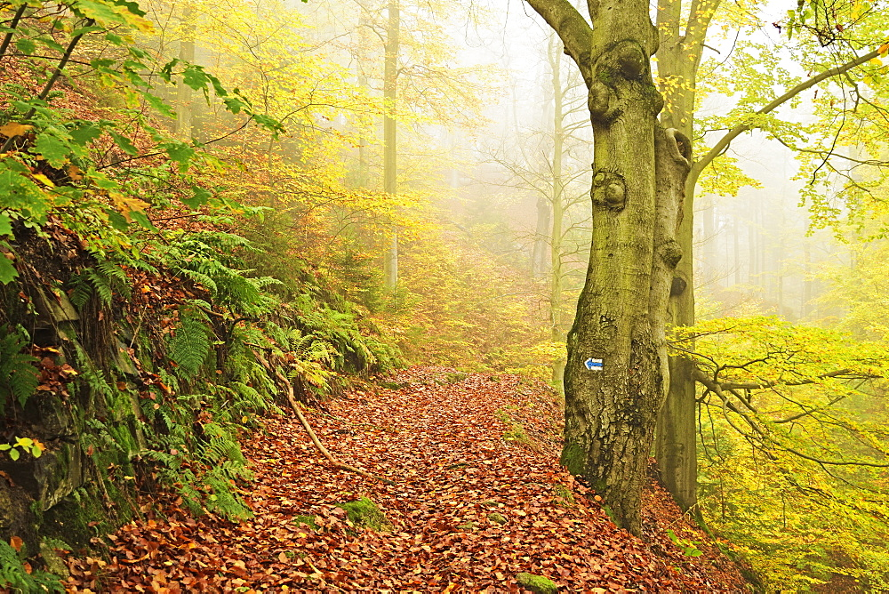 Autumn forest around Karlovy Vary, Czech Republic, Europe - 756-2779