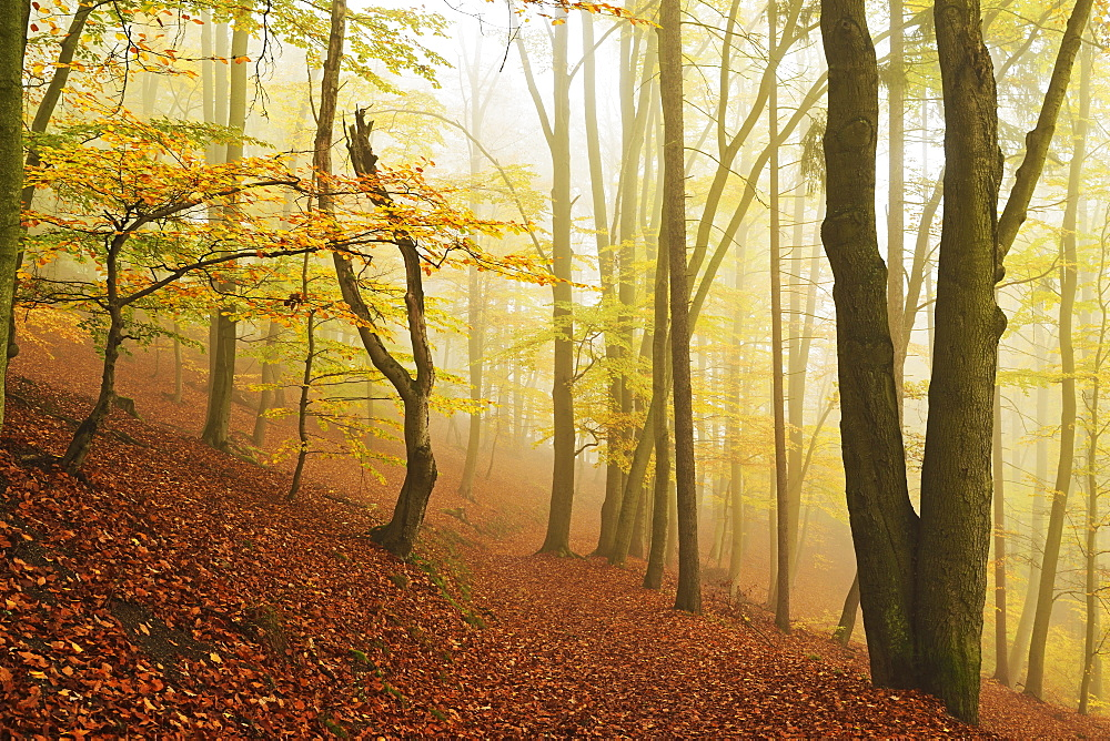 Autumn forest around Karlovy Vary, Czech Republic, Europe - 756-2781