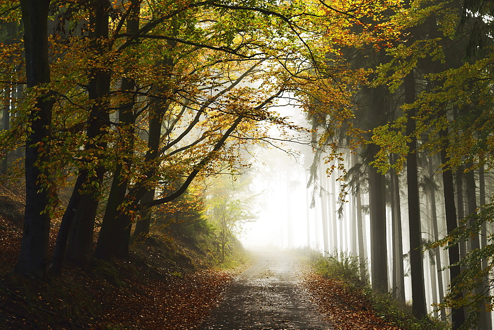 Autumn forest around Karlovy Vary, Czech Republic, Europe - 756-2784