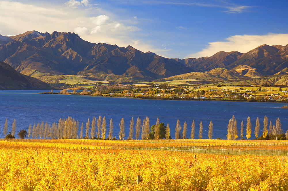 Vineyard and Lake Wanaka, Wanaka, Central Otago, South Island, New Zealand, Pacific