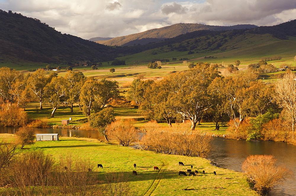 Murray River, near Towong, Victoria, Australia, Pacific