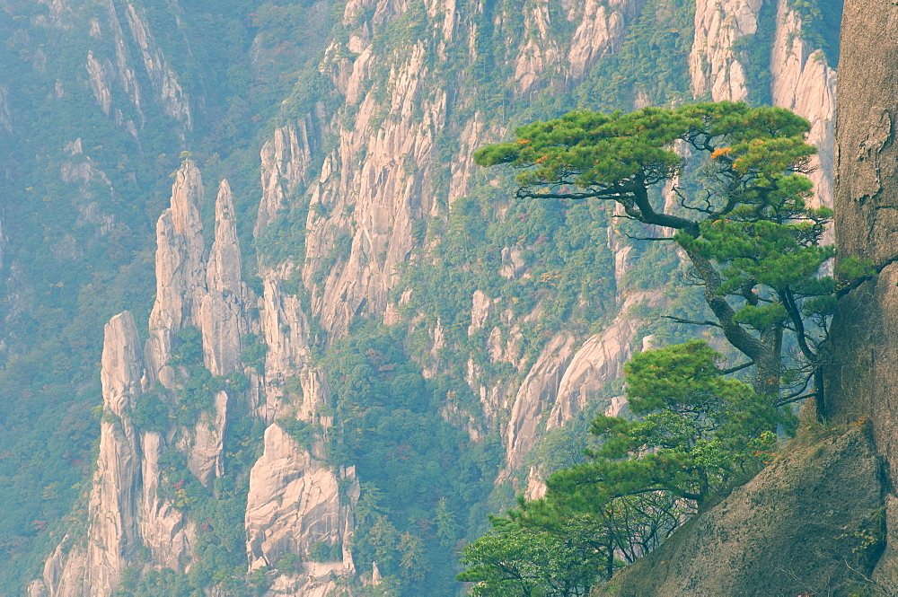 Rocks and pine trees, White Cloud scenic area, Huang Shan (Yellow Mountain), UNESCO World Heritage Site, Anhui Province, China, Asia